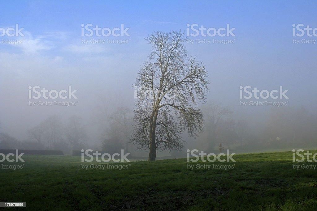 Misty Morning Tree royalty-free stock photo