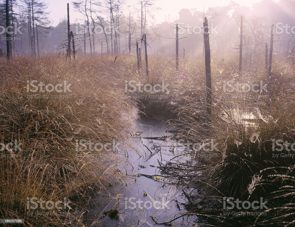 Misty morning wetland area in the Netherlands. stock photo