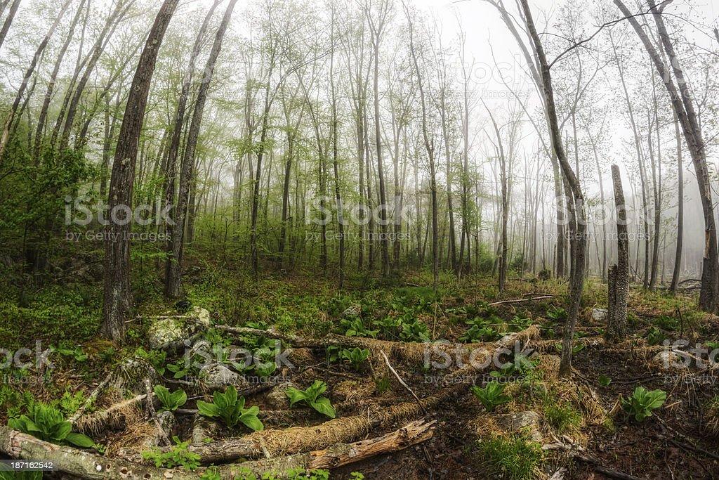 Misty Morning Wetland stock photo