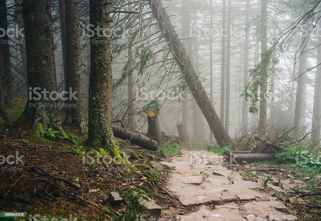Misty mountain forest stock photo
