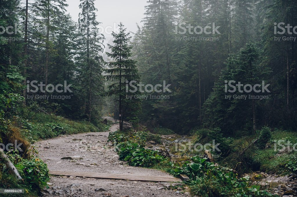 Misty mountain forest stock photo