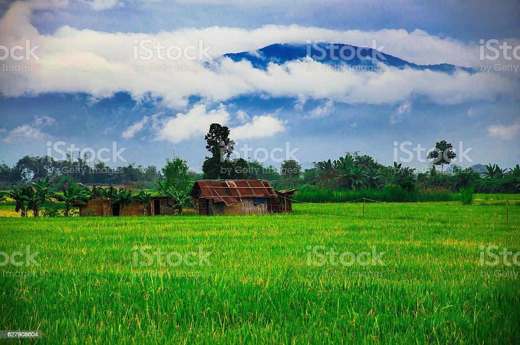 Misty Mountain over rice fields stock photo