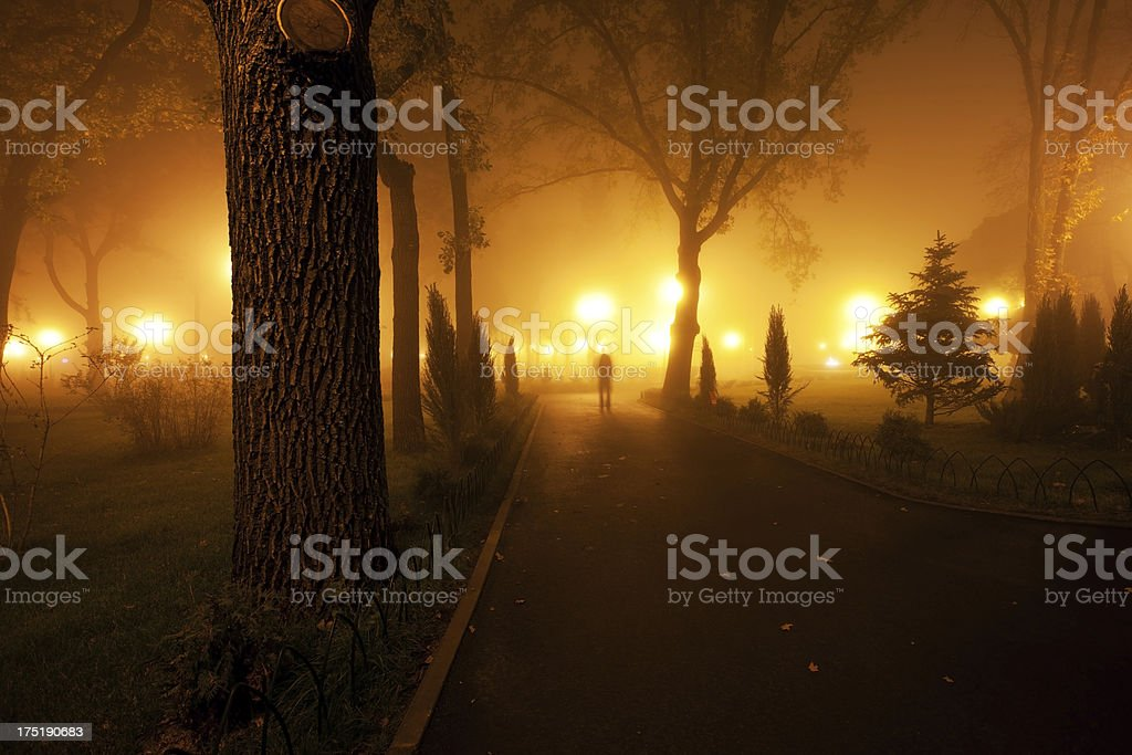 Misty night royalty-free stock photo