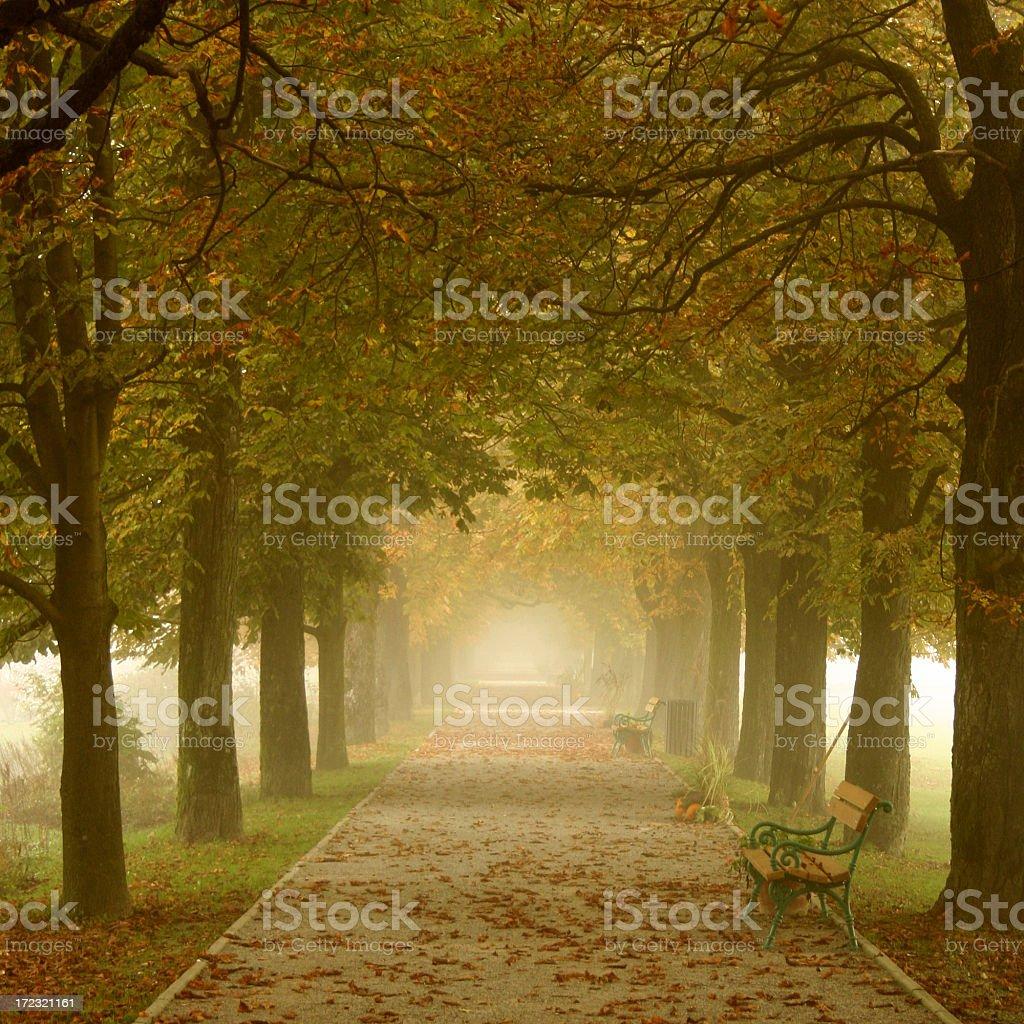 Misty Path royalty-free stock photo