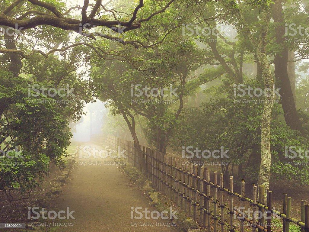 misty pathway royalty-free stock photo