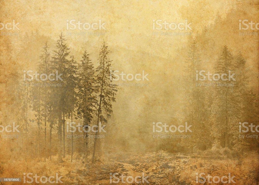misty pine grove royalty-free stock photo