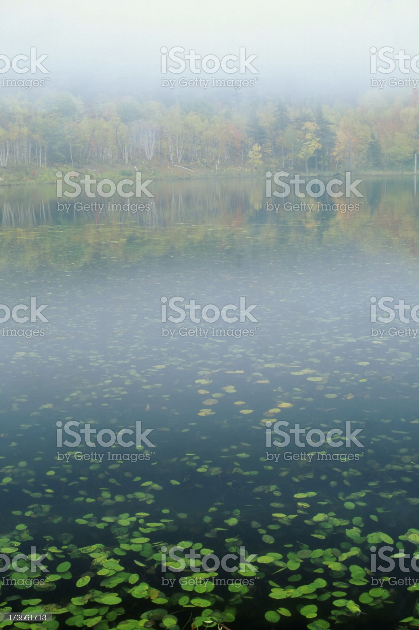 Misty Pond with Lily Pads in Autumn royalty-free stock photo