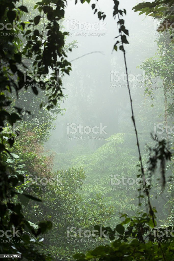 Misty rainforest in Monteverde cloud forest reserve stock photo
