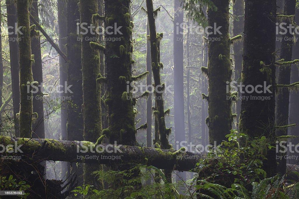Misty Rainforest stock photo