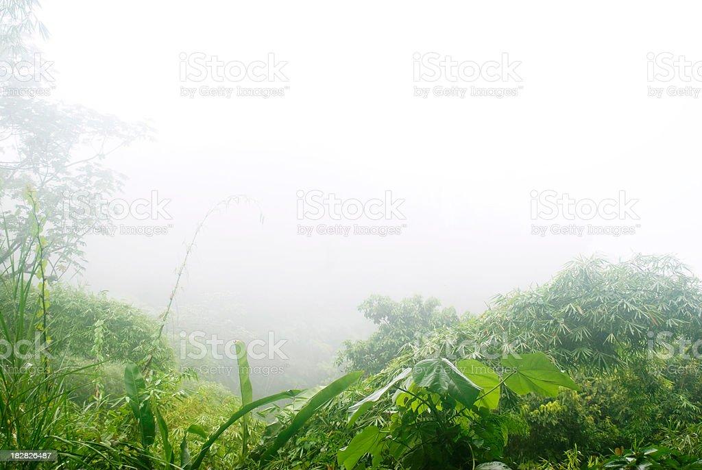 misty rainy forest wilderness royalty-free stock photo