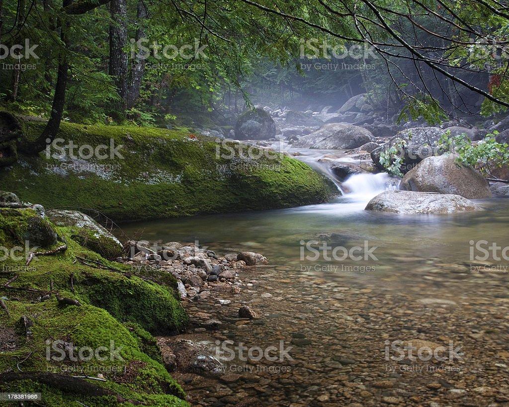 Misty River royalty-free stock photo