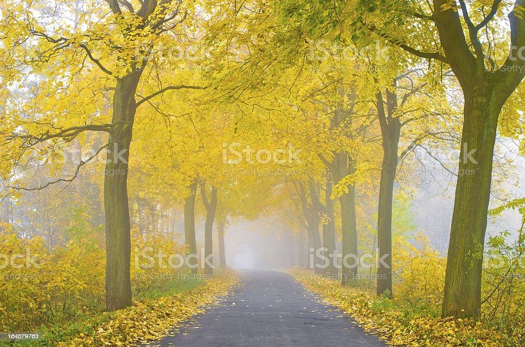 Misty road royalty-free stock photo