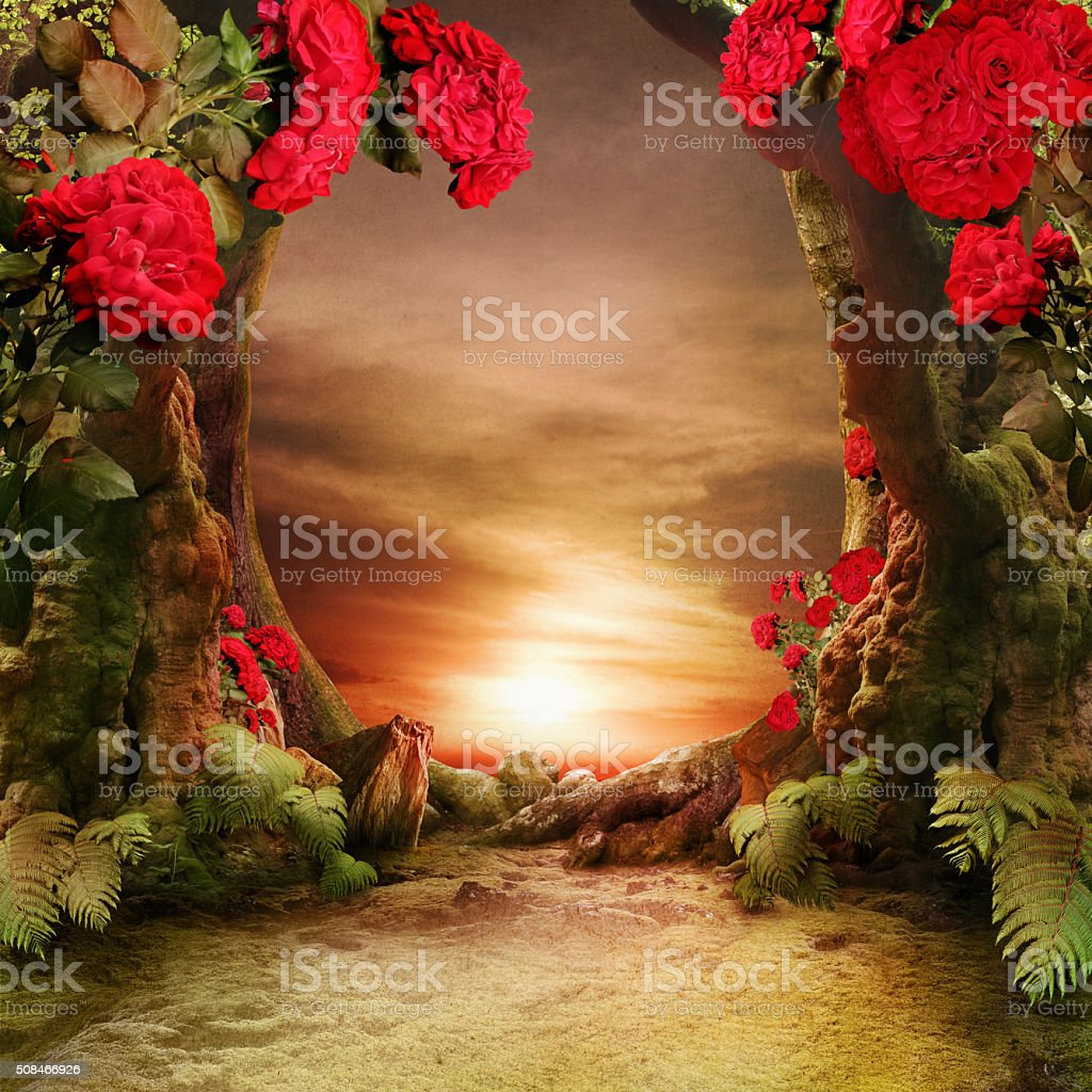 misty, romantic forest landscape with roses stock photo