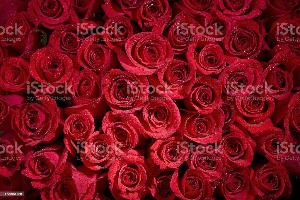 Misty Rose Background stock photo