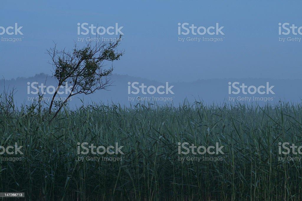 misty rush stock photo