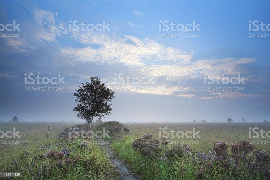 misty summer sunrise over heatherland stock photo