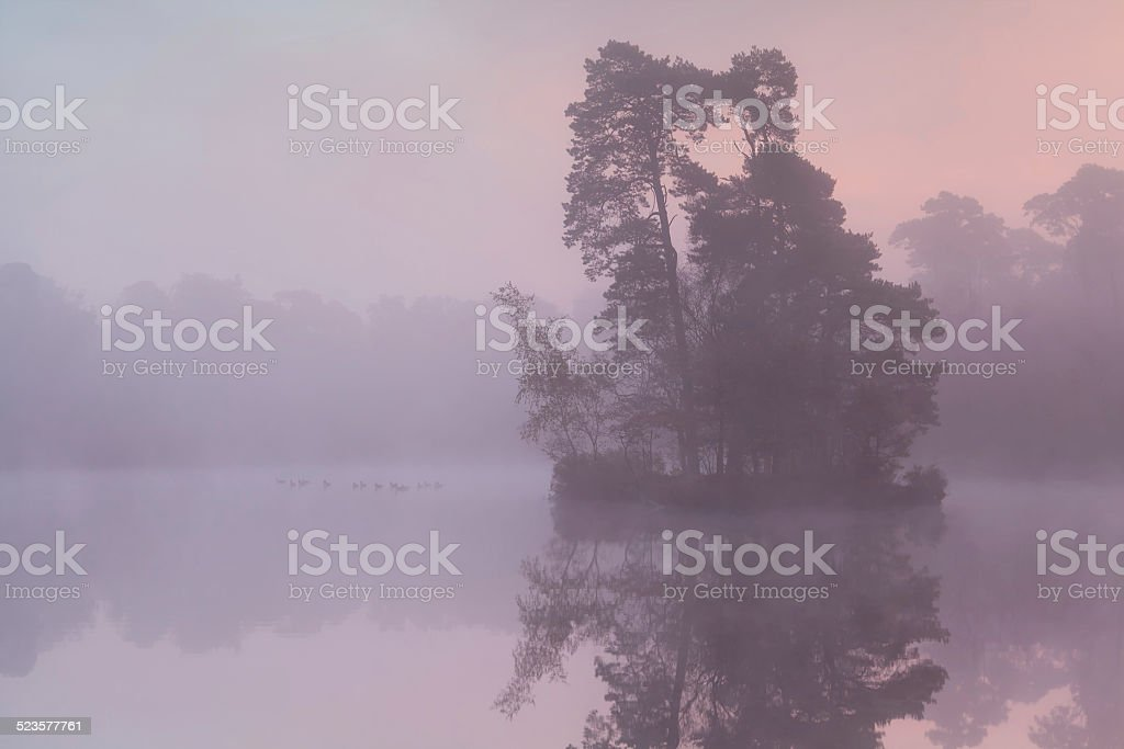 misty sunrise on forest lake with birds stock photo
