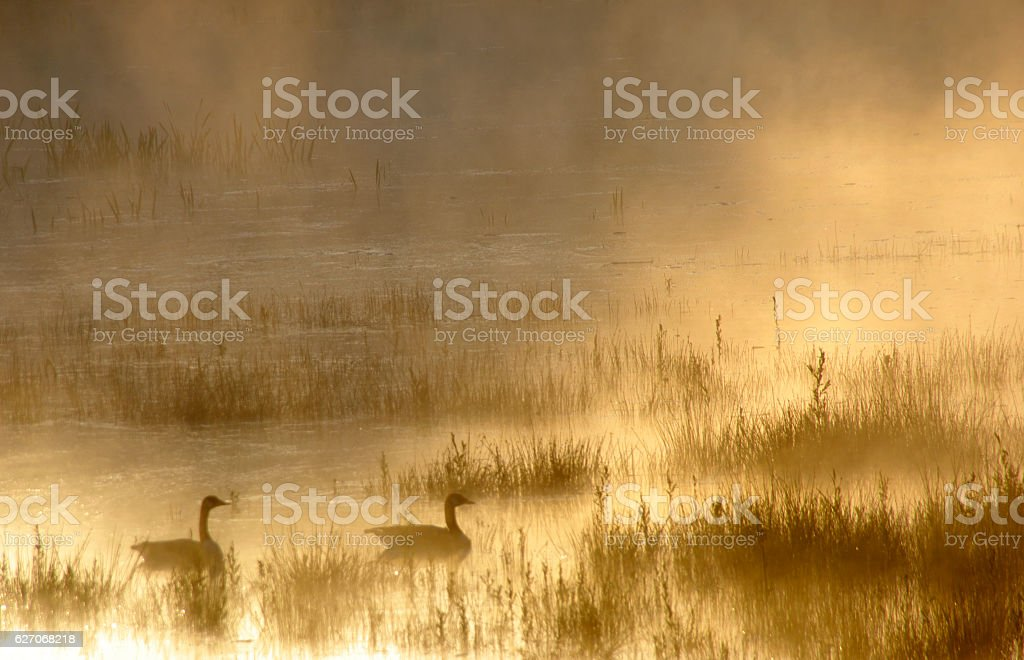 Misty sunrise  over the wetland stock photo
