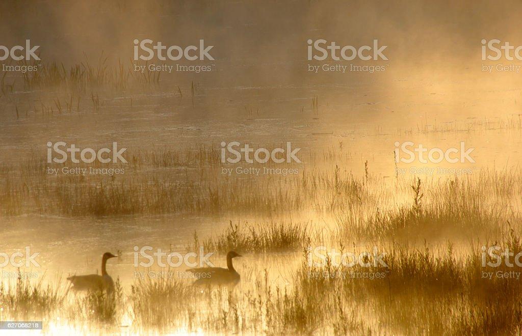 Misty sunrise  over the wetland stock photo