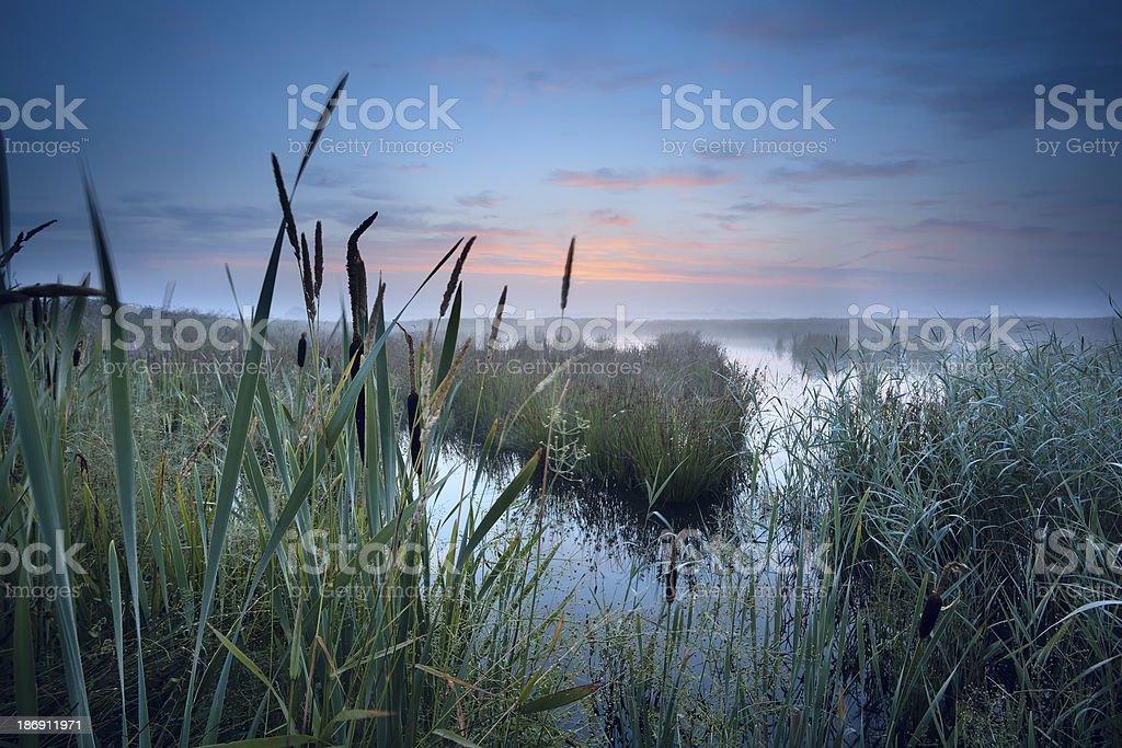 misty swamp at sunrise stock photo