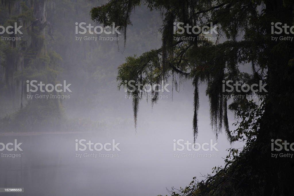 Misty swamp stock photo