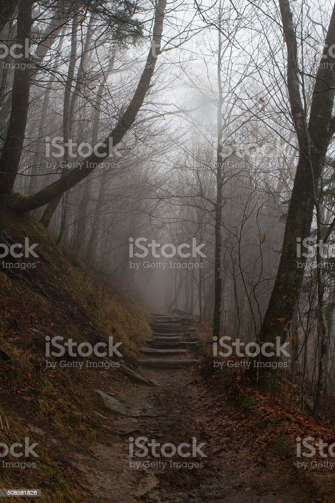 Misty Trail at Newfound Gap stock photo