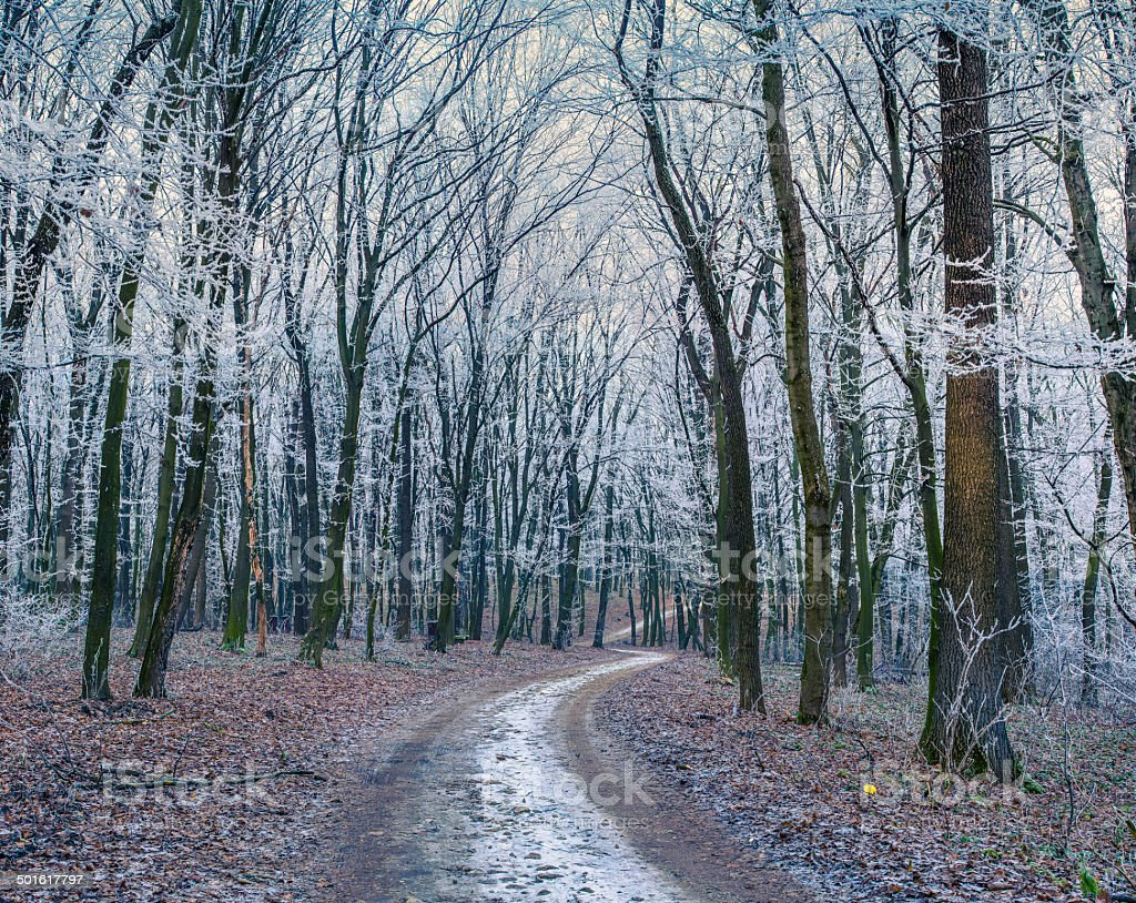 Misty trail in autumn forest stock photo