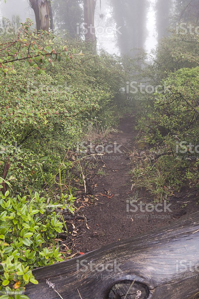 Misty Trail royalty-free stock photo