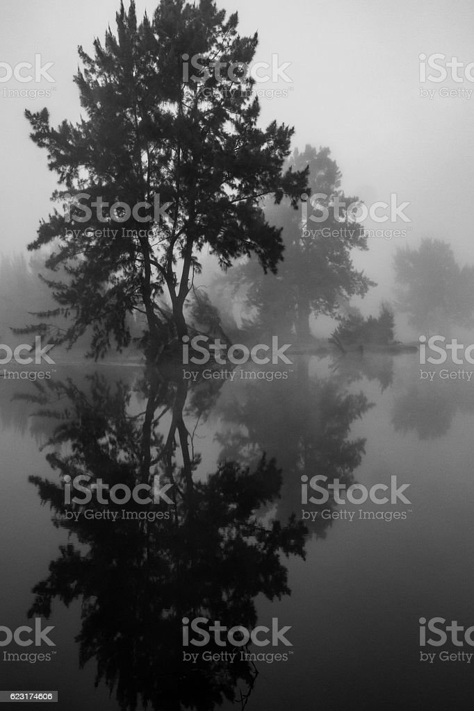 Misty Tree Reflection stock photo