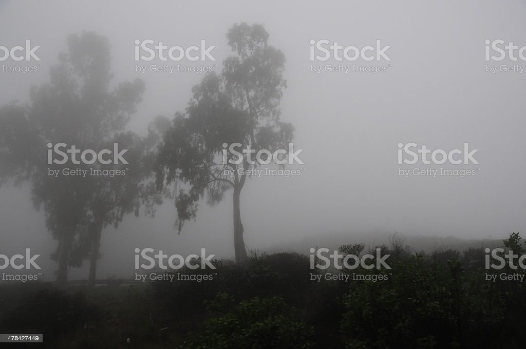 Misty trees royalty-free stock photo