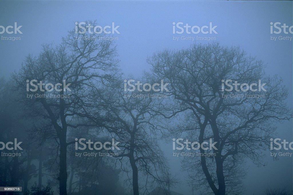 Misty Trees royalty-free stock photo