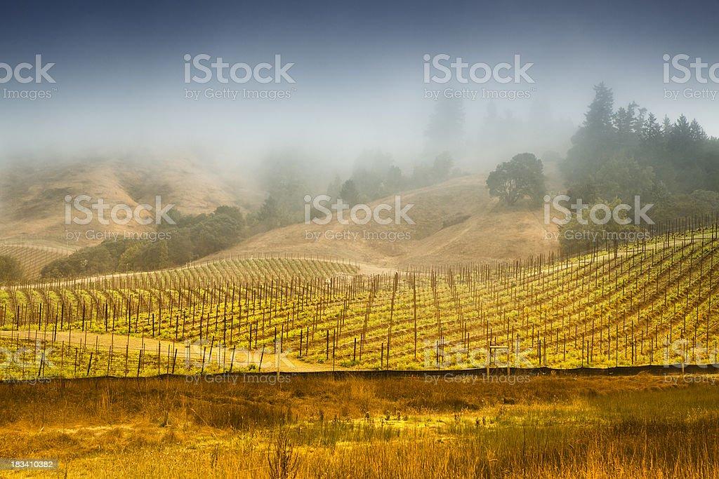 Misty vineyard, Napa Valley, California, USA royalty-free stock photo
