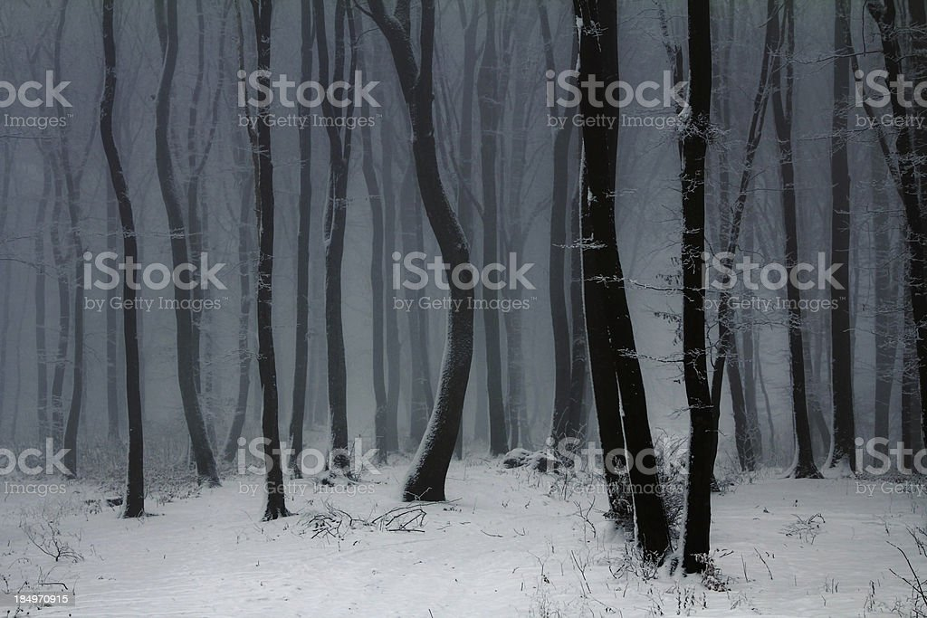 Misty winter forest stock photo