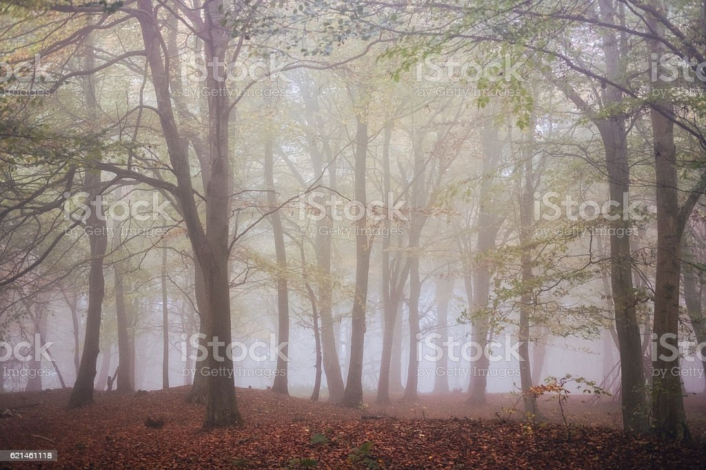 Misty woods in Autumn / Fall. stock photo
