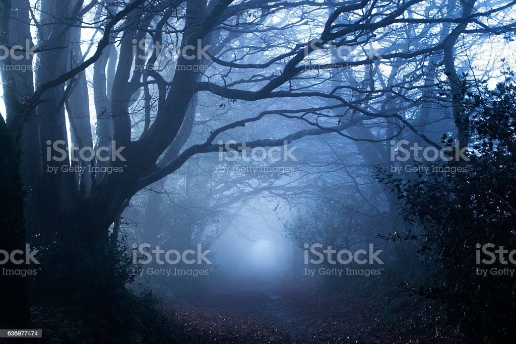Misty woods stock photo