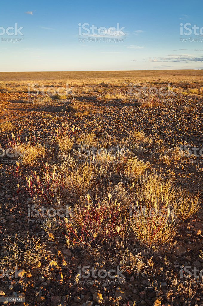 Mitchell Grass plain stock photo