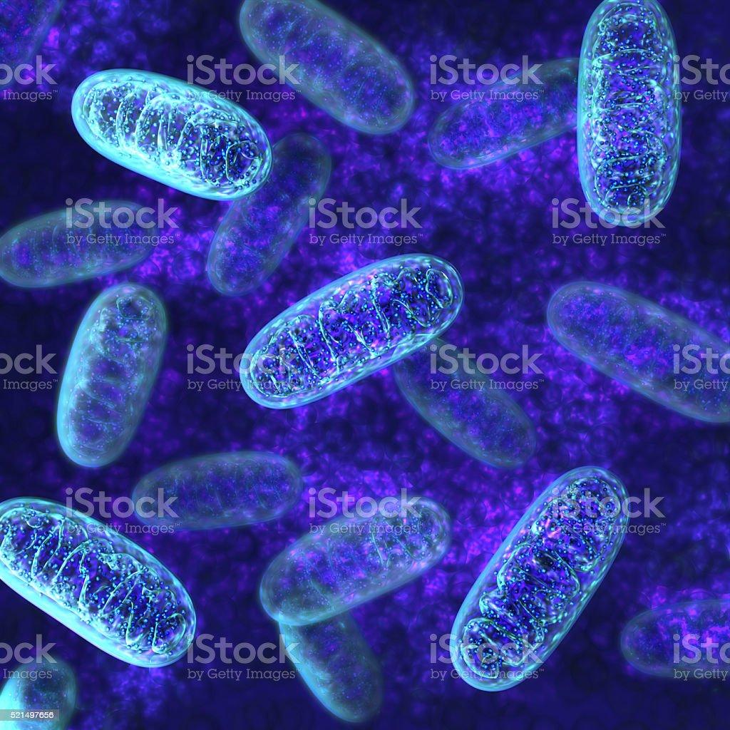 Mitochondria - microbiology stock photo