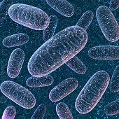 Mitochondrium. 3d rendering.