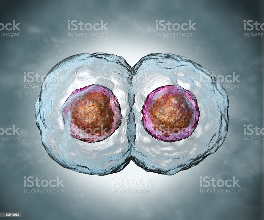 Mitosis stock photo