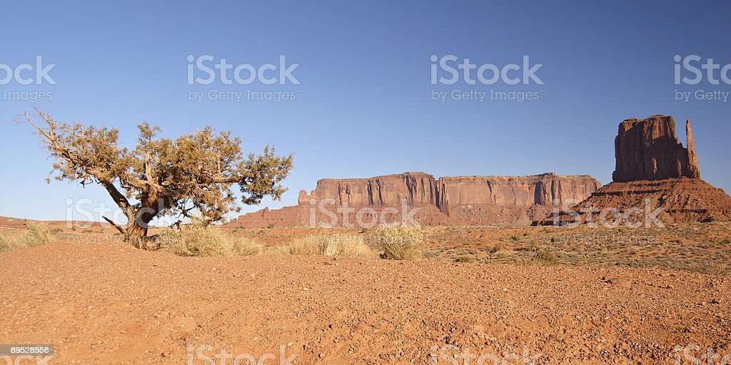 Mitten and a tree in Monument Valley royalty-free stock photo