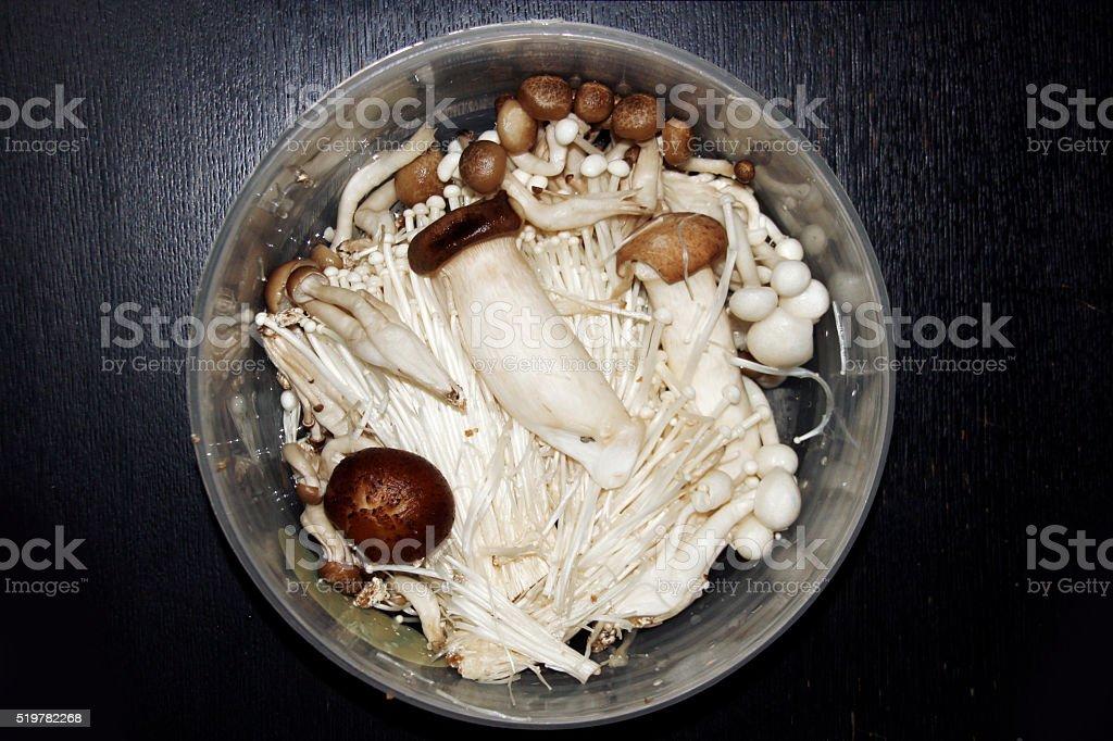 mix mushroom on dark background stock photo