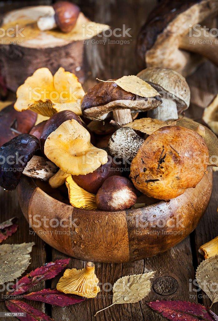 Mix of autumn wild forest edible mushrooms stock photo