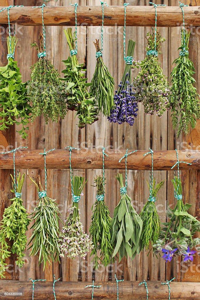 mix of fresh herbs stock photo