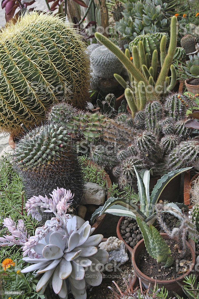 mix of many succulents and cactus royalty-free stock photo
