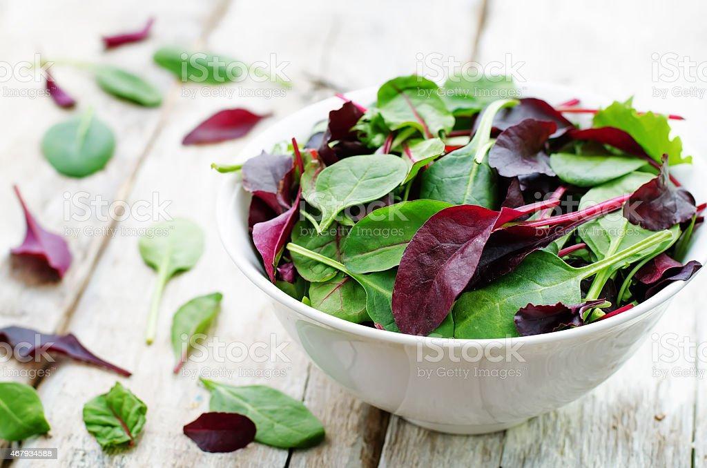 mix salad Romaine, arugula, spinach, mizuna, chard, oak salad stock photo