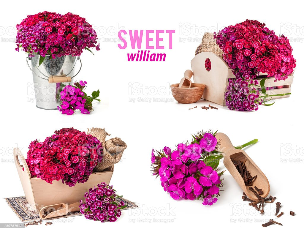 mix Turkish carnations bouquet isolated stock photo