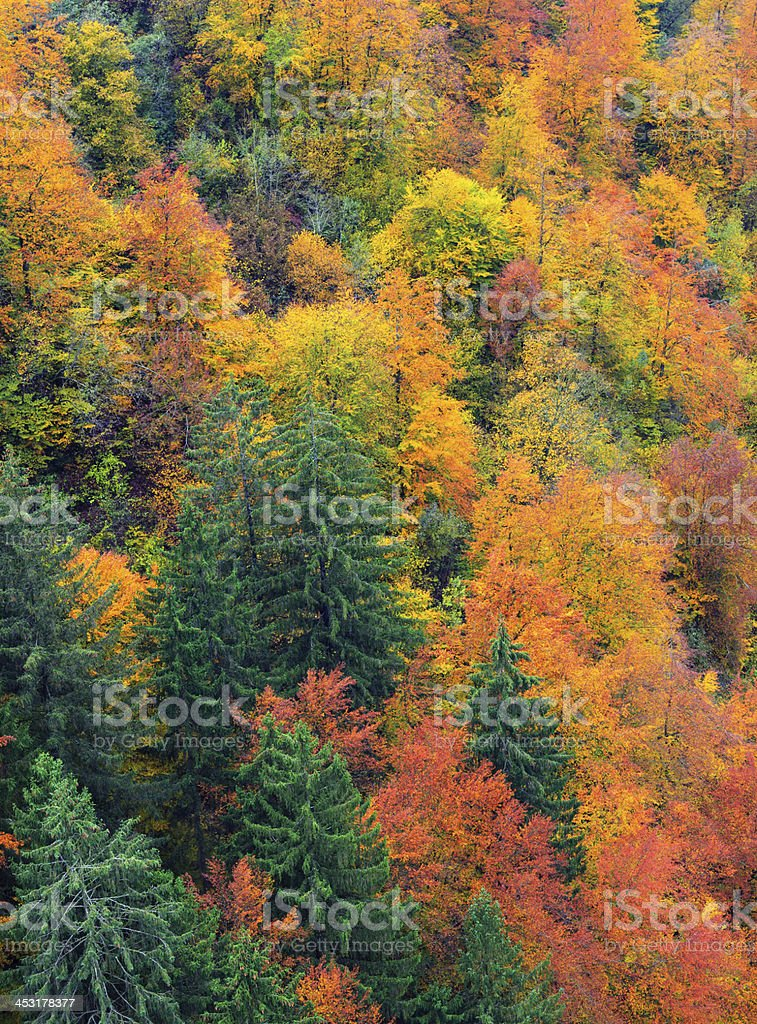 Mixed Autumn Forest royalty-free stock photo