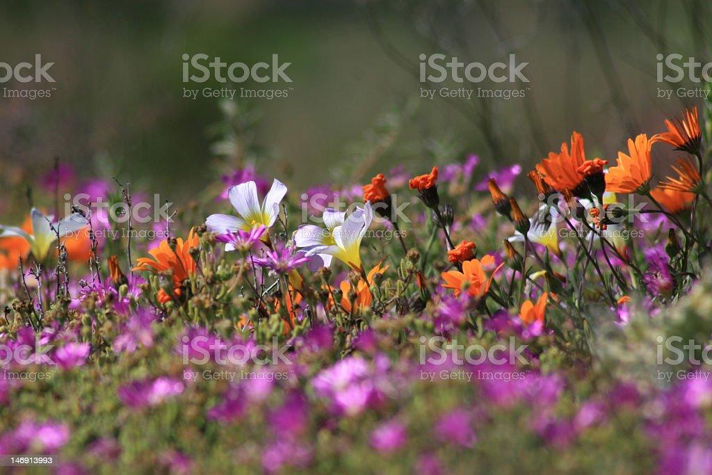 Mixed blooms stock photo
