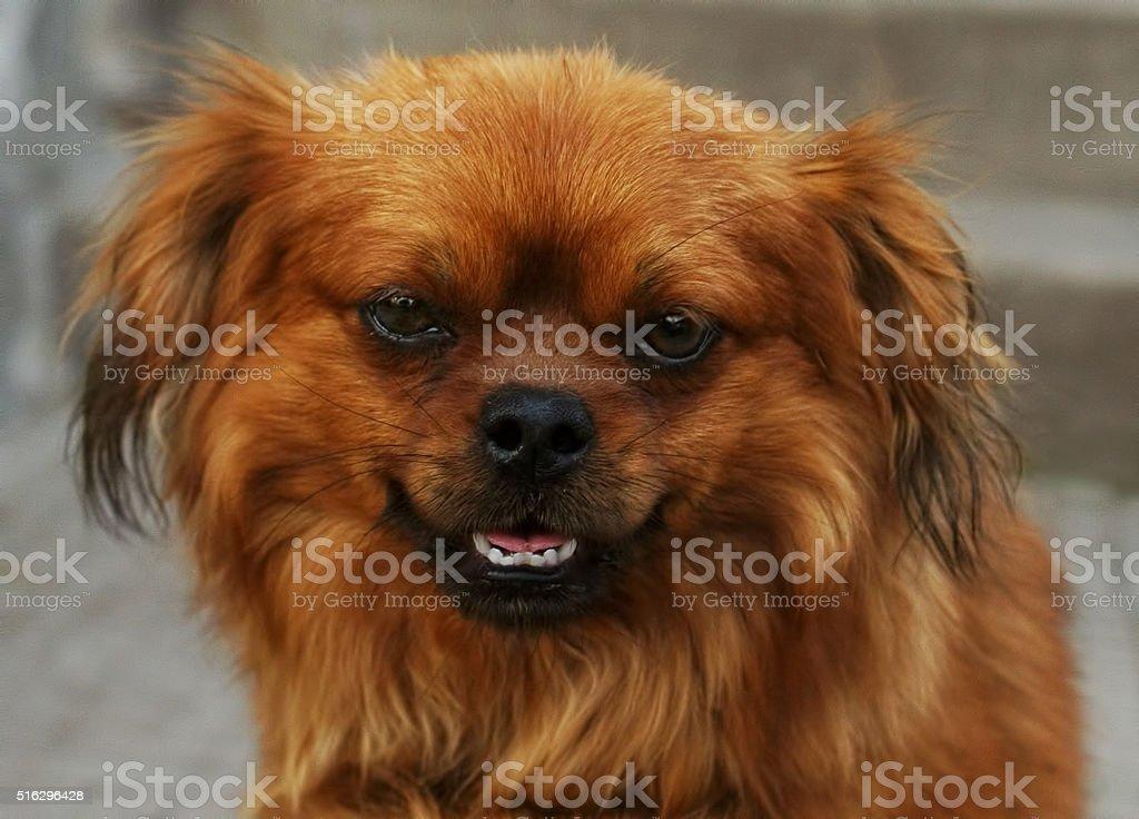 Mixed breed dog headshot stock photo