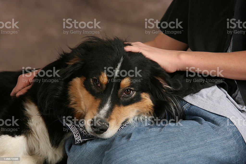 Mixed Breed Dog royalty-free stock photo